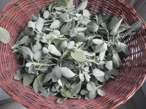 Drying The Sage
