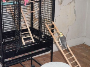 Pookie and The Viking Ladder